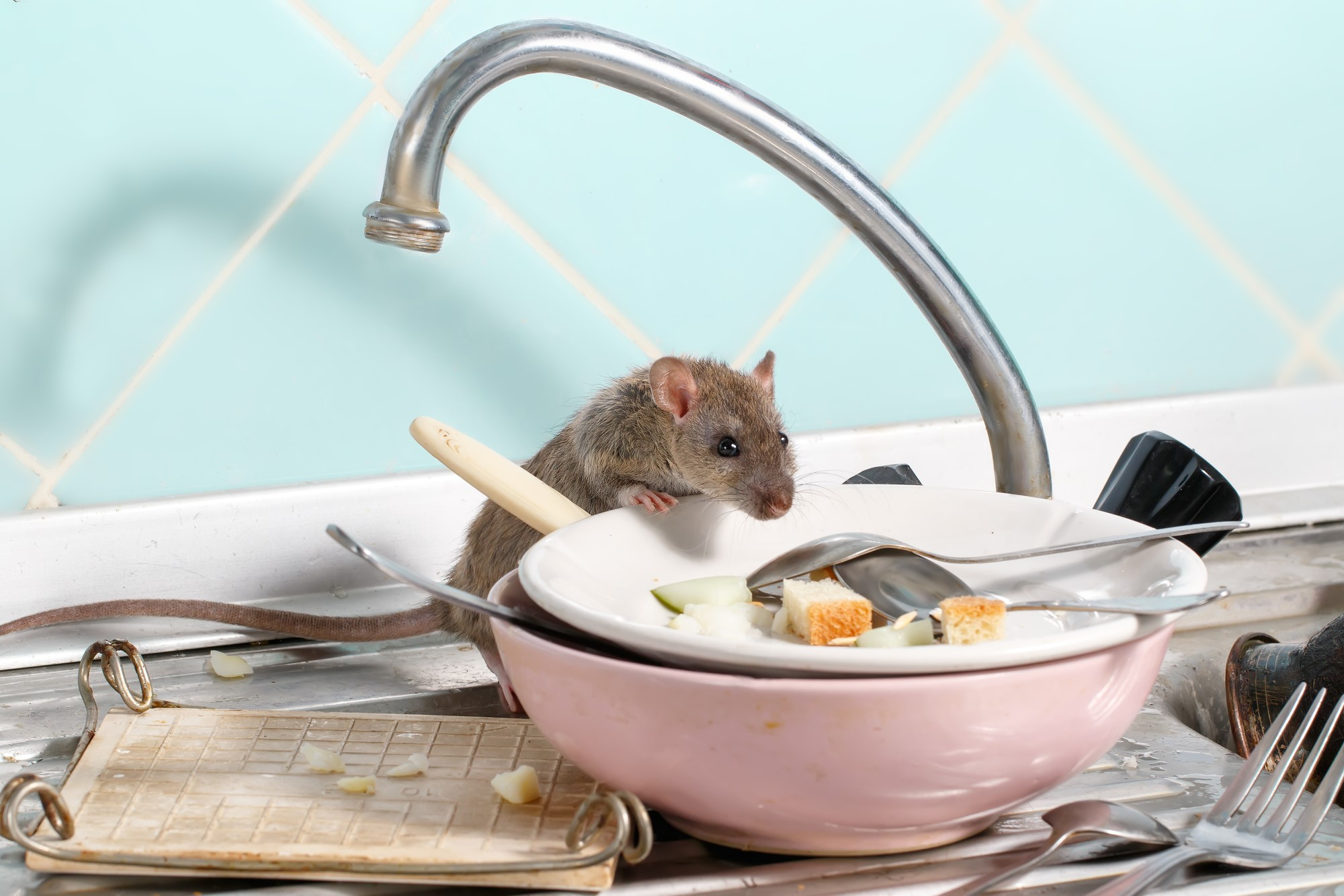 Choosing an Exterminator to Handle Your Pest Problem